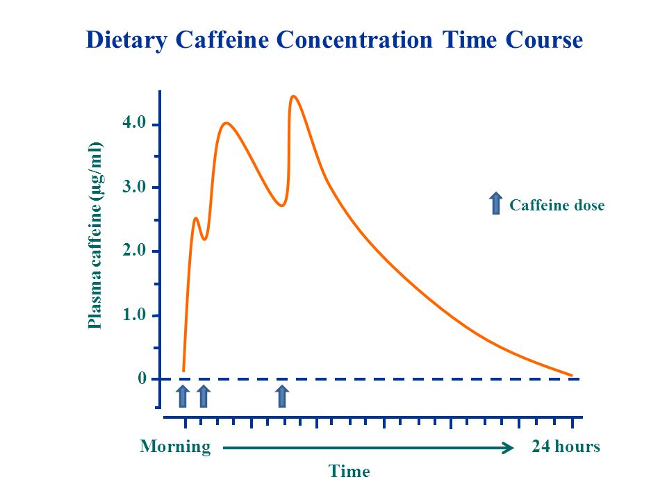 0 3.0 2.0 1.0 4.0 Plasma caffeine (µg/ml) Dietary Caffeine Concentration Time Course Morning Time 24 hours Caffeine dose