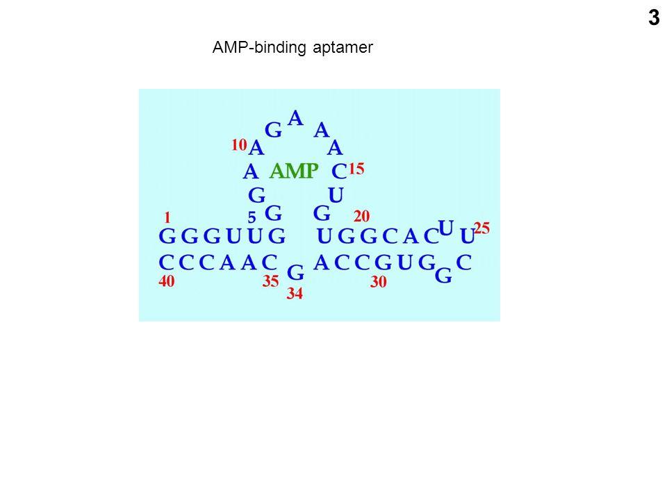 3 AMP-binding aptamer