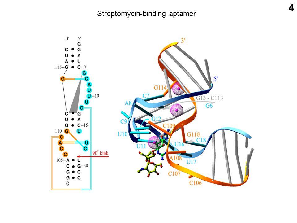 4 Streptomycin-binding aptamer