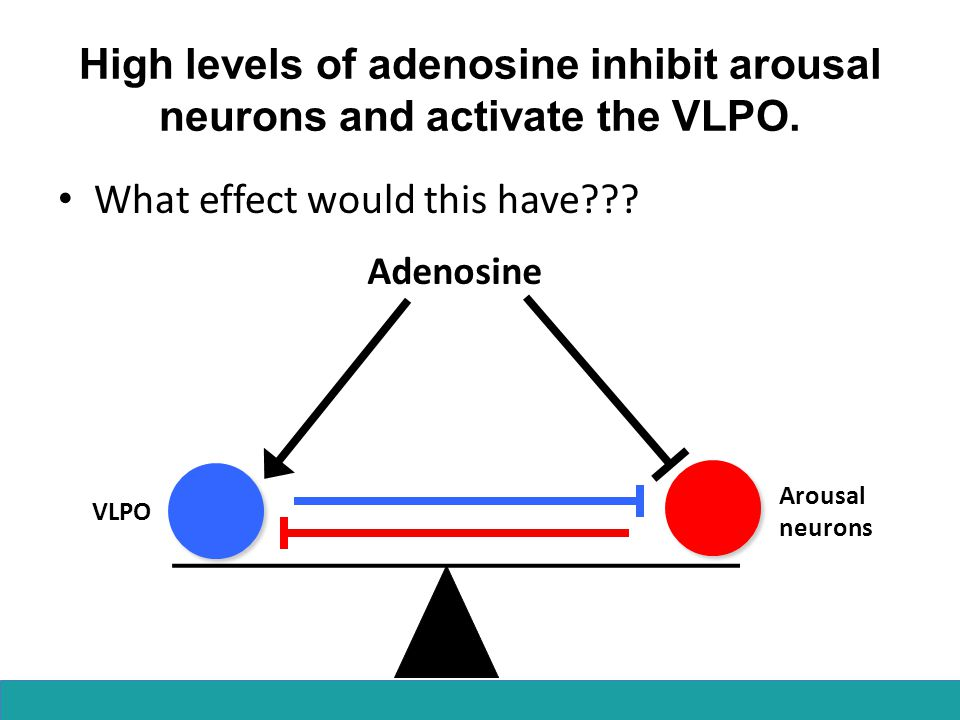 High levels of adenosine inhibit arousal neurons and activate the VLPO. What effect would this have??? Adenosine Arousal neurons VLPO