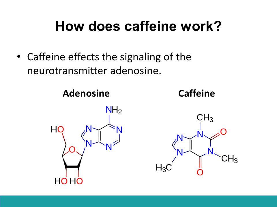 How does caffeine work? Caffeine effects the signaling of the neurotransmitter adenosine. AdenosineCaffeine