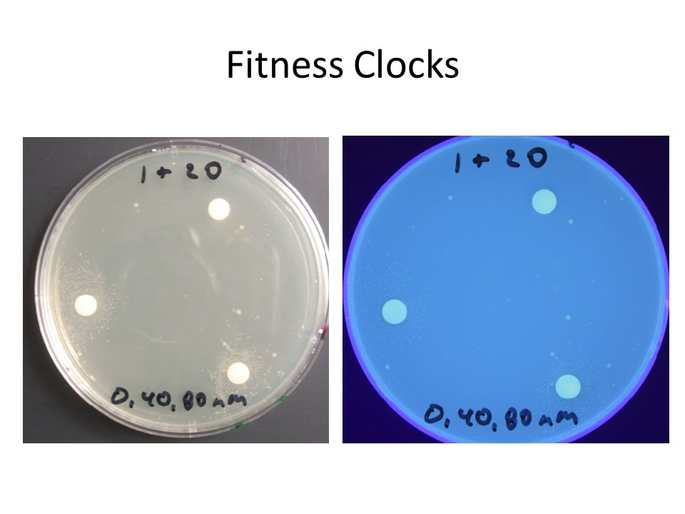 Fitness Clocks