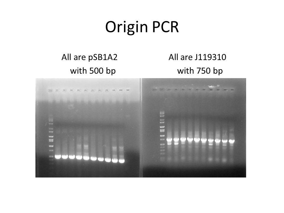 Chaperone PCR Marker 1.pG-Tf2 2.pTf16 3.pG-KJE8 4.pGro7 5.pKJE7