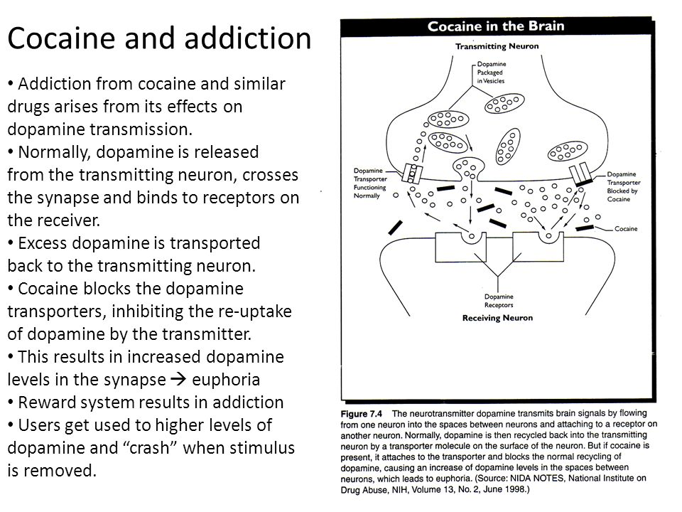 Cocaine and addiction Addiction from cocaine and similar drugs arises from its effects on dopamine transmission.