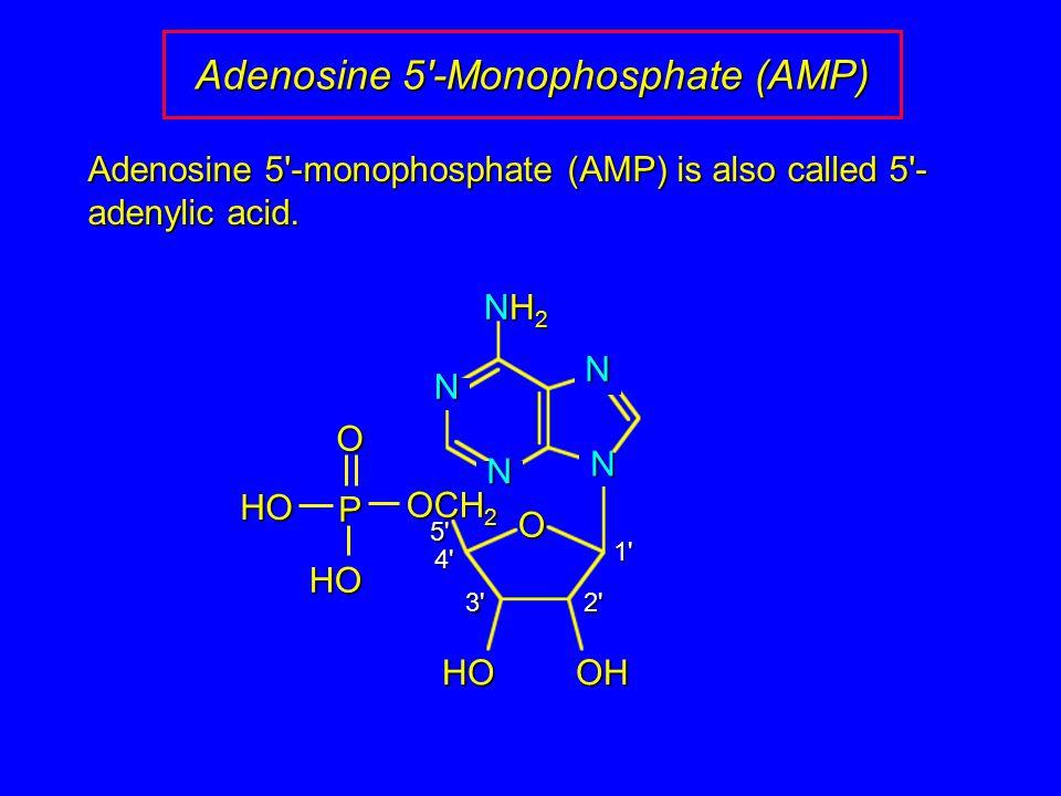 Adenosine 5 -Monophosphate (AMP) Adenosine 5 -monophosphate (AMP) is also called 5 - adenylic acid.