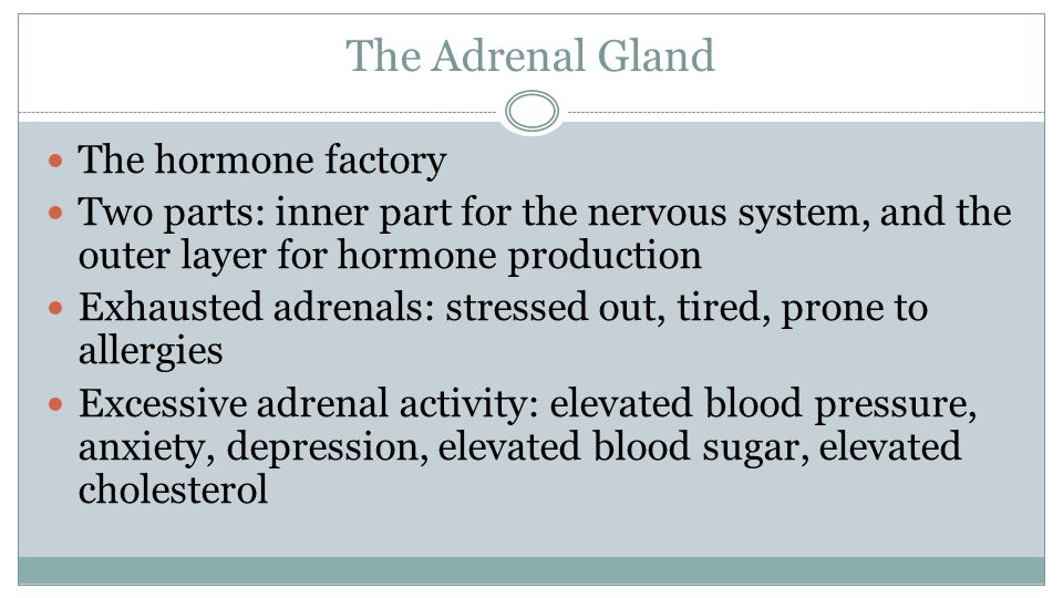 The Adrenal Gland The hormone factory Two parts: inner part for the nervous system, and the outer layer for hormone production Exhausted adrenals: stressed out, tired, prone to allergies Excessive adrenal activity: elevated blood pressure, anxiety, depression, elevated blood sugar, elevated cholesterol