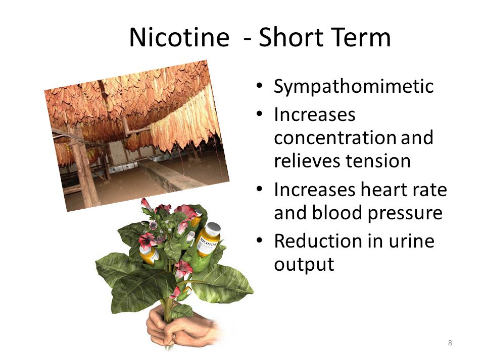 8 Nicotine - Short Term Sympathomimetic Increases concentration and relieves tension Increases heart rate and blood pressure Reduction in urine output