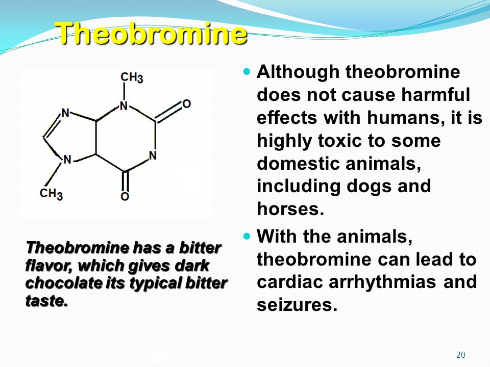 Although theobromine does not cause harmful effects with humans, it is highly toxic to some domestic animals, including dogs and horses.