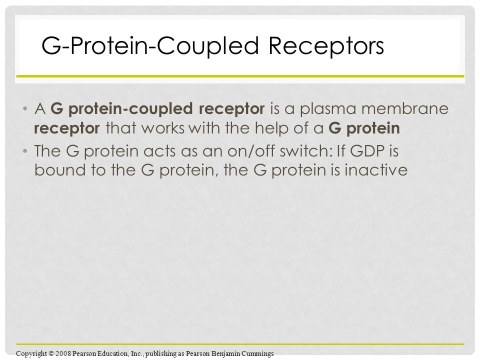 A G protein-coupled receptor is a plasma membrane receptor that works with the help of a G protein The G protein acts as an on/off switch: If GDP is bound to the G protein, the G protein is inactive Copyright © 2008 Pearson Education, Inc., publishing as Pearson Benjamin Cummings G-Protein-Coupled Receptors