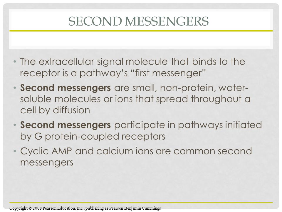 SECOND MESSENGERS The extracellular signal molecule that binds to the receptor is a pathway's first messenger Second messengers are small, non-protein, water- soluble molecules or ions that spread throughout a cell by diffusion Second messengers participate in pathways initiated by G protein-coupled receptors Cyclic AMP and calcium ions are common second messengers Copyright © 2008 Pearson Education, Inc., publishing as Pearson Benjamin Cummings