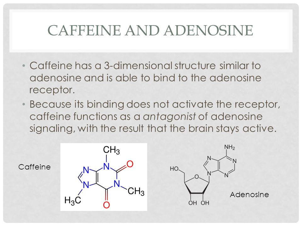 CAFFEINE AND ADENOSINE Caffeine has a 3-dimensional structure similar to adenosine and is able to bind to the adenosine receptor.