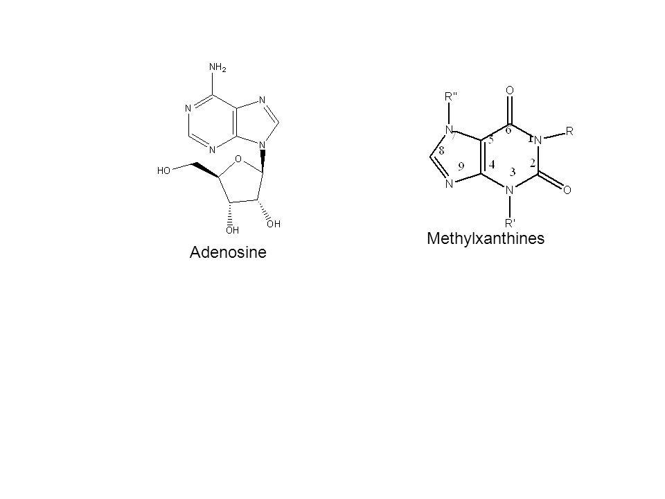 Adenosine Methylxanthines