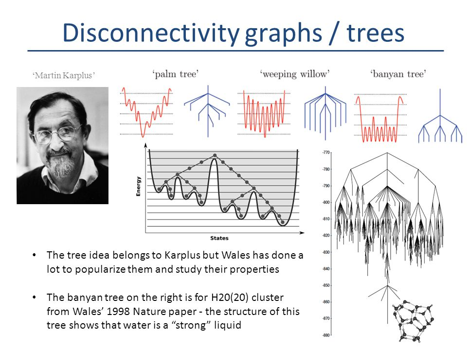 Disconnectivity graphs / trees The tree idea belongs to Karplus but Wales has done a lot to popularize them and study their properties The banyan tree on the right is for H20(20) cluster from Wales' 1998 Nature paper - the structure of this tree shows that water is a strong liquid 'Martin Karplus'