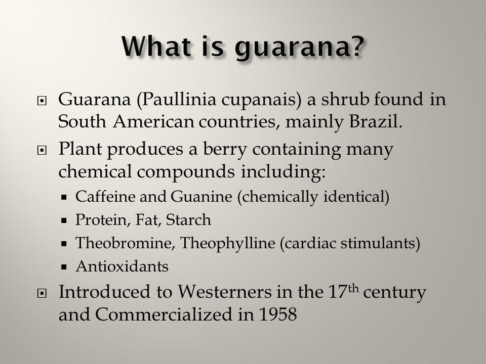  Guarana (Paullinia cupanais) a shrub found in South American countries, mainly Brazil.