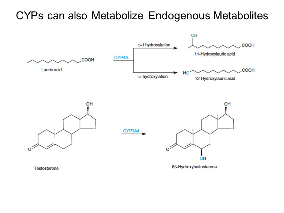 CYPs can also Metabolize Endogenous Metabolites