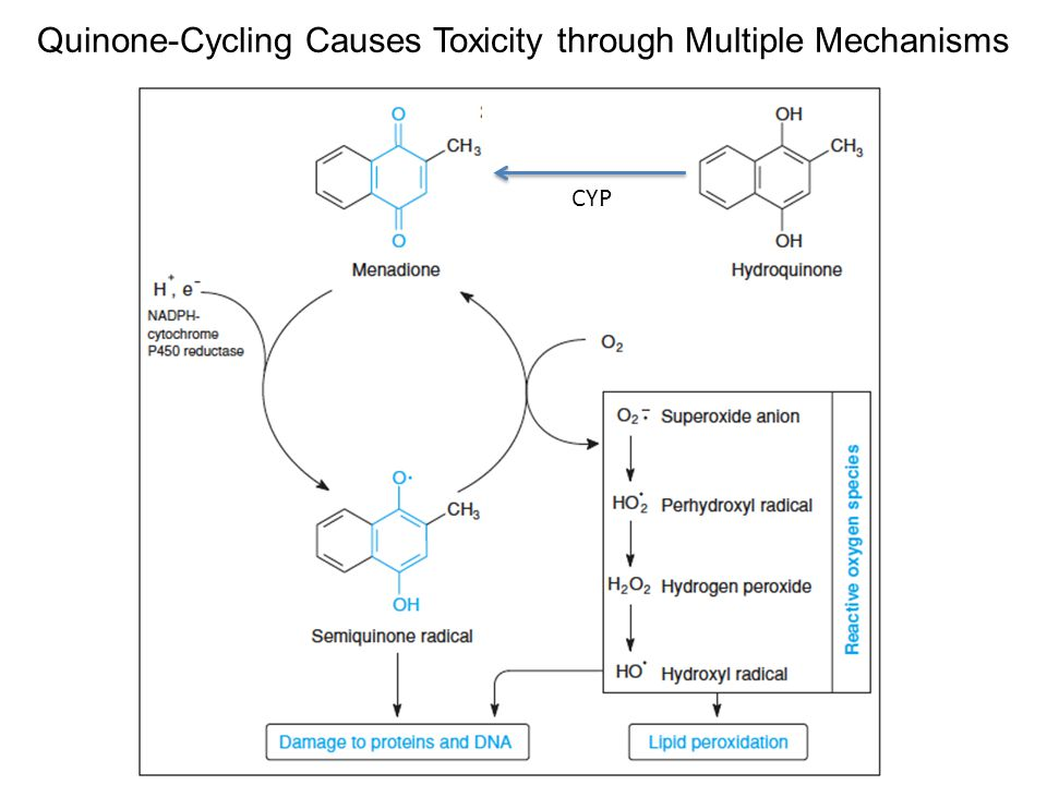 Quinone-Cycling Causes Toxicity through Multiple Mechanisms CYP