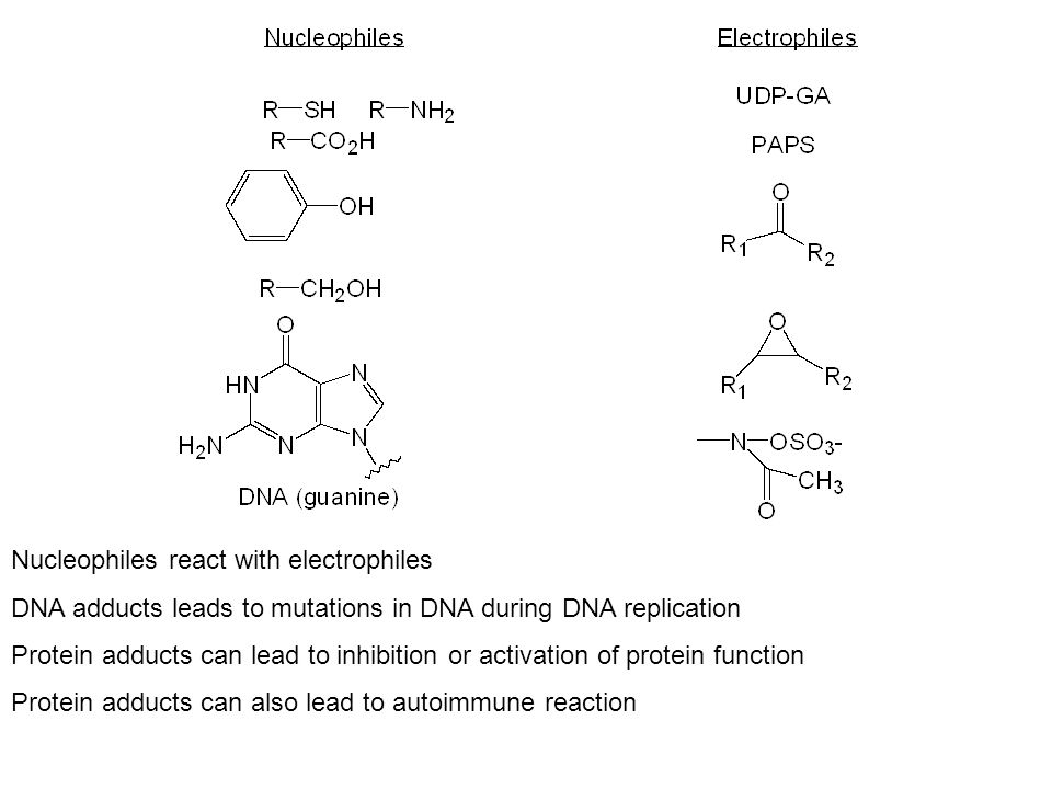 Nucleophiles react with electrophiles DNA adducts leads to mutations in DNA during DNA replication Protein adducts can lead to inhibition or activation of protein function Protein adducts can also lead to autoimmune reaction