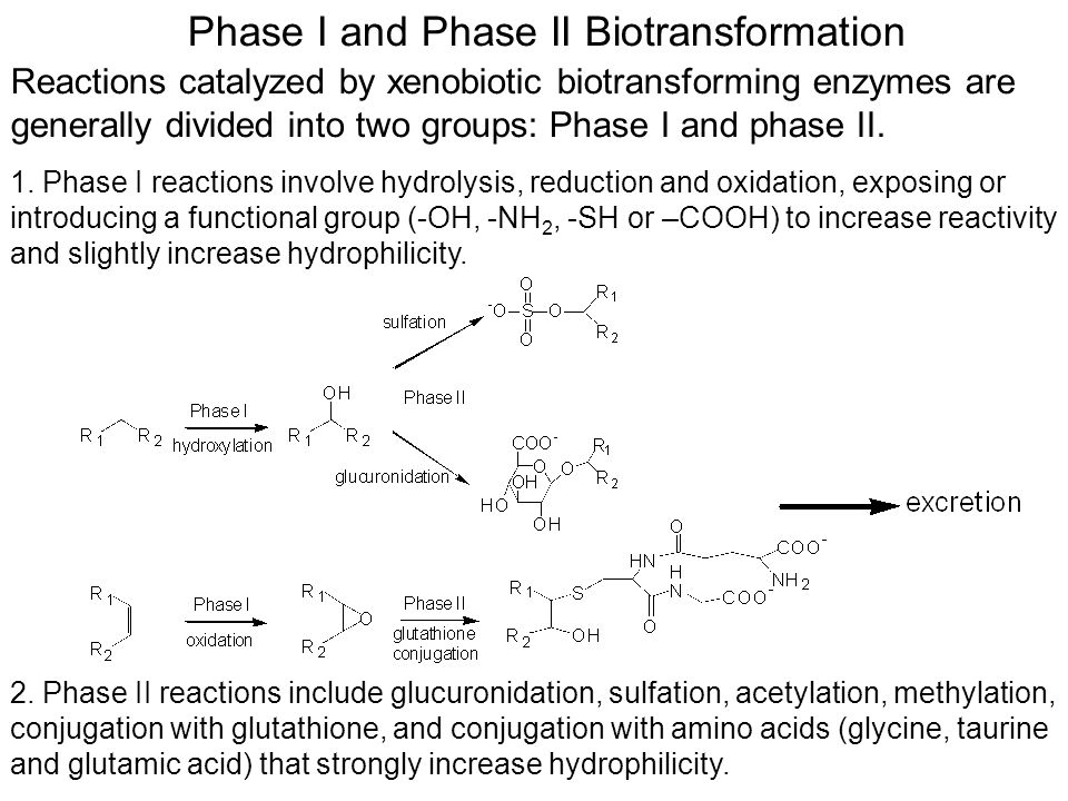 Phase I and Phase II Biotransformation Reactions catalyzed by xenobiotic biotransforming enzymes are generally divided into two groups: Phase I and phase II.