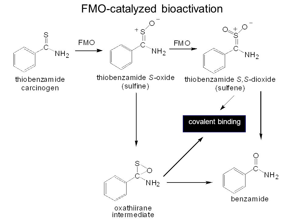 FMO-catalyzed bioactivation covalent binding