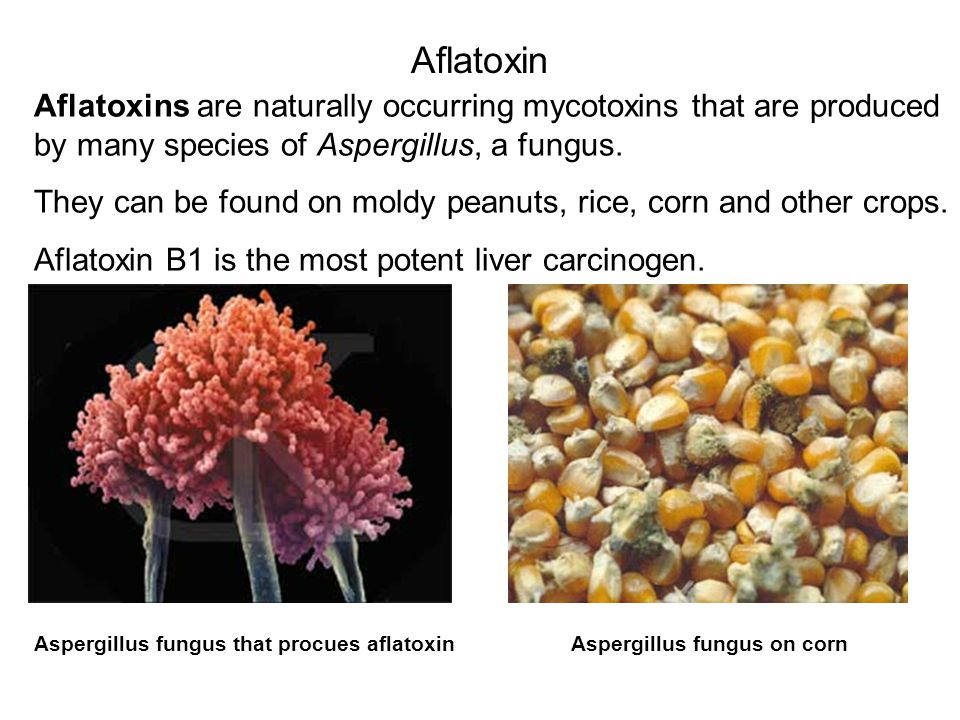 Aflatoxin Aflatoxins are naturally occurring mycotoxins that are produced by many species of Aspergillus, a fungus.