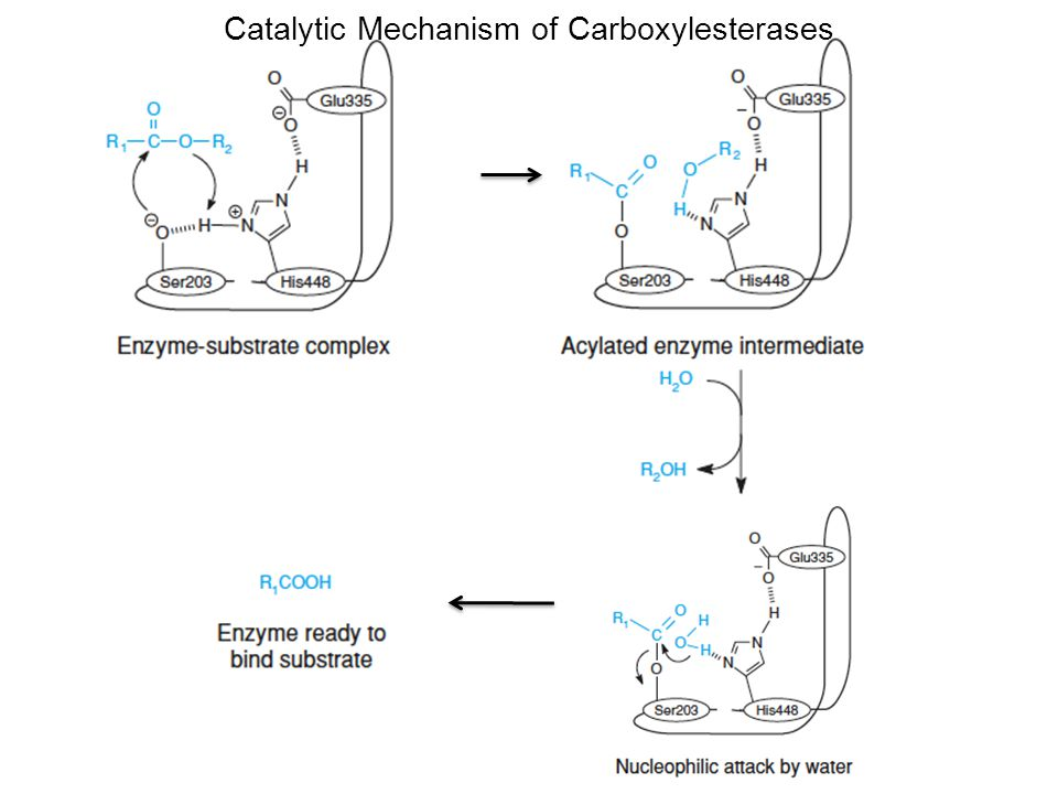 Catalytic Mechanism of Carboxylesterases