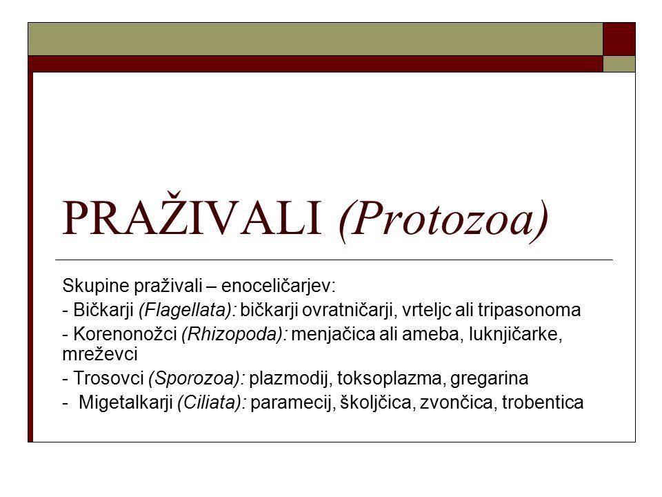 PRAŽIVALI (Protozoa) Skupine praživali – enoceličarjev: - Bičkarji (Flagellata): bičkarji ovratničarji, vrteljc ali tripasonoma - Korenonožci (Rhizopo