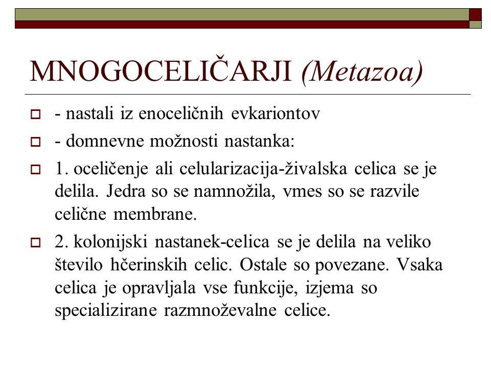 MNOGOCELIČARJI (Metazoa)  - nastali iz enoceličnih evkariontov  - domnevne možnosti nastanka:  1. oceličenje ali celularizacija-živalska celica se
