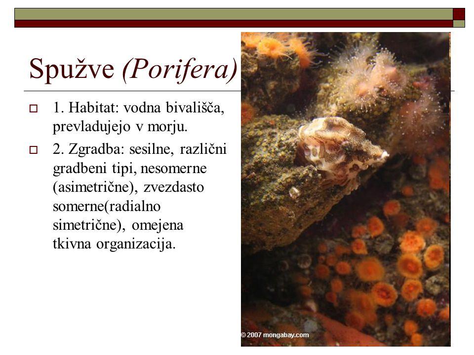 Spužve (Porifera)  1. Habitat: vodna bivališča, prevladujejo v morju.  2. Zgradba: sesilne, različni gradbeni tipi, nesomerne (asimetrične), zvezdas