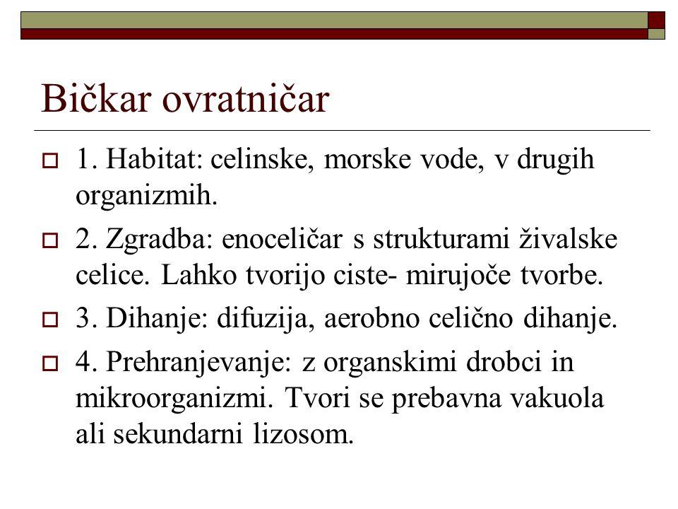 Bičkar ovratničar  1. Habitat: celinske, morske vode, v drugih organizmih.  2. Zgradba: enoceličar s strukturami živalske celice. Lahko tvorijo cist