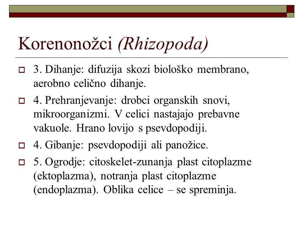 Korenonožci (Rhizopoda)  3. Dihanje: difuzija skozi biološko membrano, aerobno celično dihanje.  4. Prehranjevanje: drobci organskih snovi, mikroorg