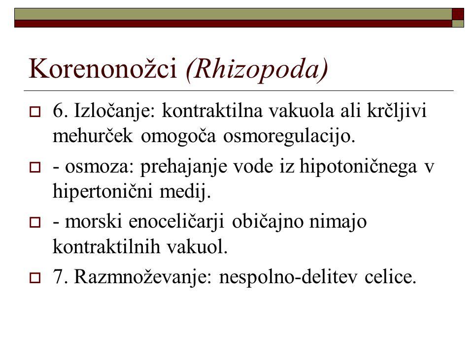 Korenonožci (Rhizopoda)  6. Izločanje: kontraktilna vakuola ali krčljivi mehurček omogoča osmoregulacijo.  - osmoza: prehajanje vode iz hipotoničneg