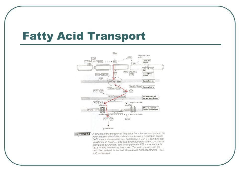 Fatty Acid Transport