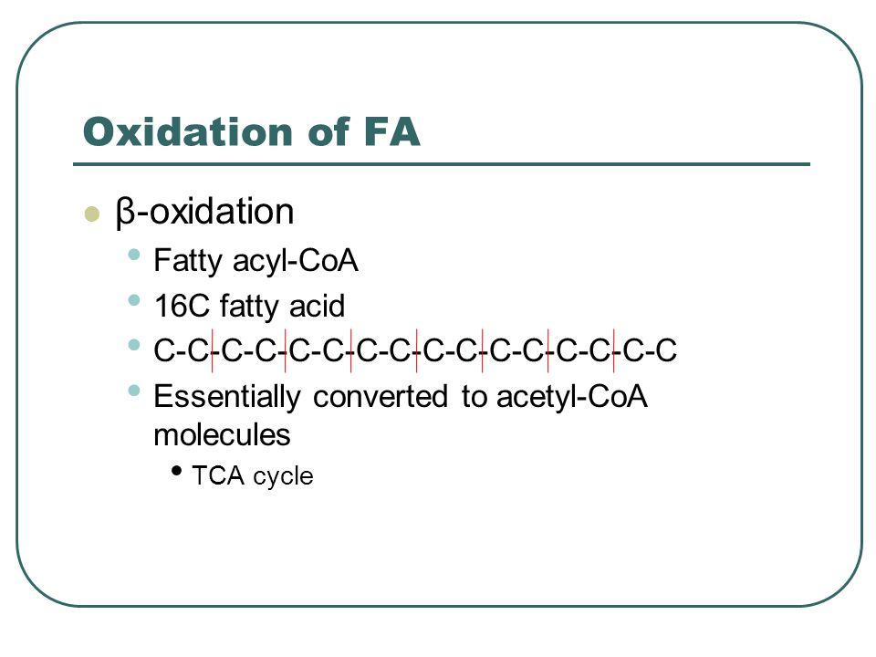 Oxidation of FA β-oxidation Fatty acyl-CoA 16C fatty acid C-C-C-C-C-C-C-C-C-C-C-C-C-C-C-C Essentially converted to acetyl-CoA molecules TCA cycle