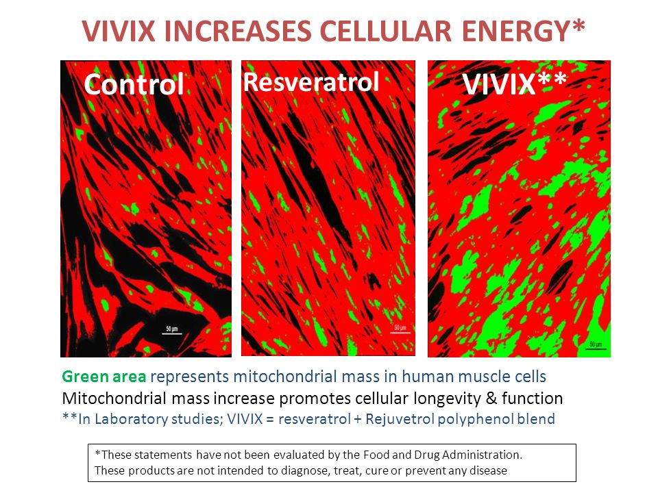 VIVIX INCREASES CELLULAR ENERGY* Control Green area represents mitochondrial mass in human muscle cells Mitochondrial mass increase promotes cellular longevity & function **In Laboratory studies; VIVIX = resveratrol + Rejuvetrol polyphenol blend Resveratrol VIVIX** *These statements have not been evaluated by the Food and Drug Administration.