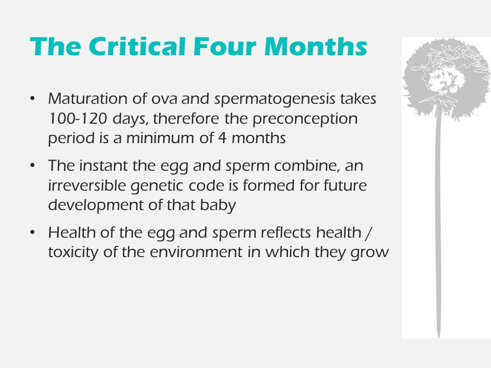 The Critical Four Months Maturation of ova and spermatogenesis takes 100-120 days, therefore the preconception period is a minimum of 4 months The ins