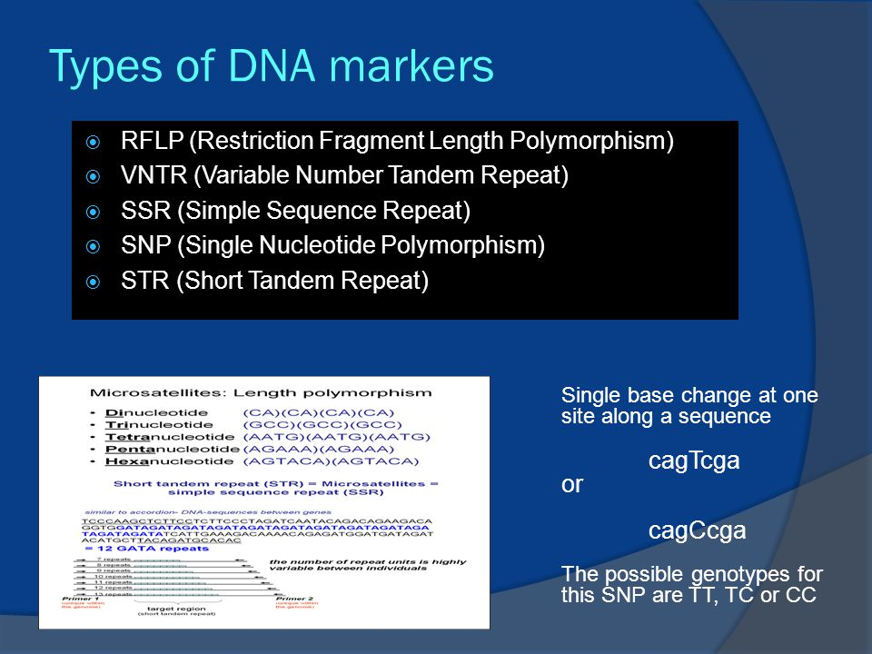 Types of DNA markers  RFLP (Restriction Fragment Length Polymorphism)  VNTR (Variable Number Tandem Repeat)  SSR (Simple Sequence Repeat)  SNP (Single Nucleotide Polymorphism)  STR (Short Tandem Repeat) Single base change at one site along a sequence cagTcga or cagCcga The possible genotypes for this SNP are TT, TC or CC