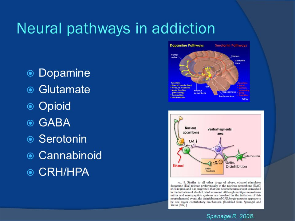 Neural pathways in addiction  Dopamine  Glutamate  Opioid  GABA  Serotonin  Cannabinoid  CRH/HPA Spanagel R, 2008.