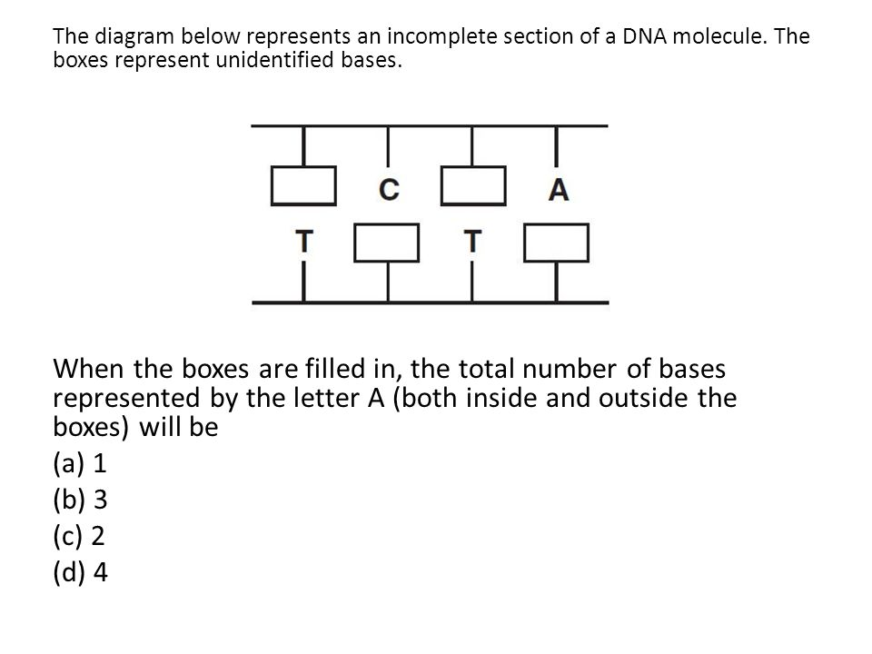 The diagram below represents an incomplete section of a DNA molecule. The boxes represent unidentified bases. When the boxes are filled in, the total