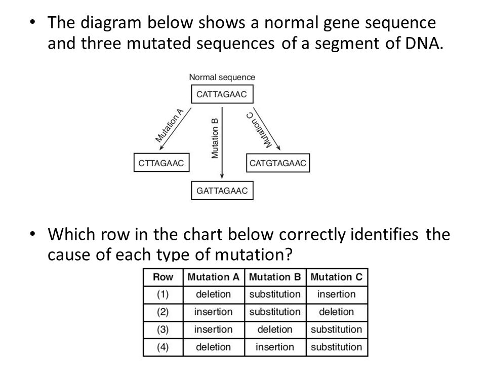 The diagram below shows a normal gene sequence and three mutated sequences of a segment of DNA. Which row in the chart below correctly identifies the
