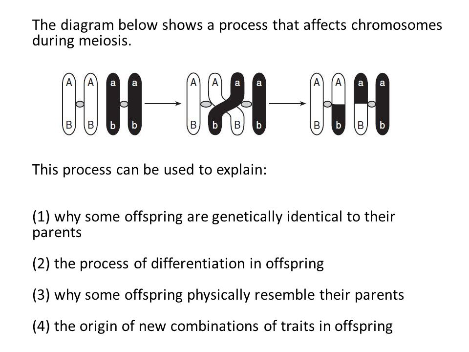 The diagram below shows a process that affects chromosomes during meiosis. This process can be used to explain: (1) why some offspring are genetically