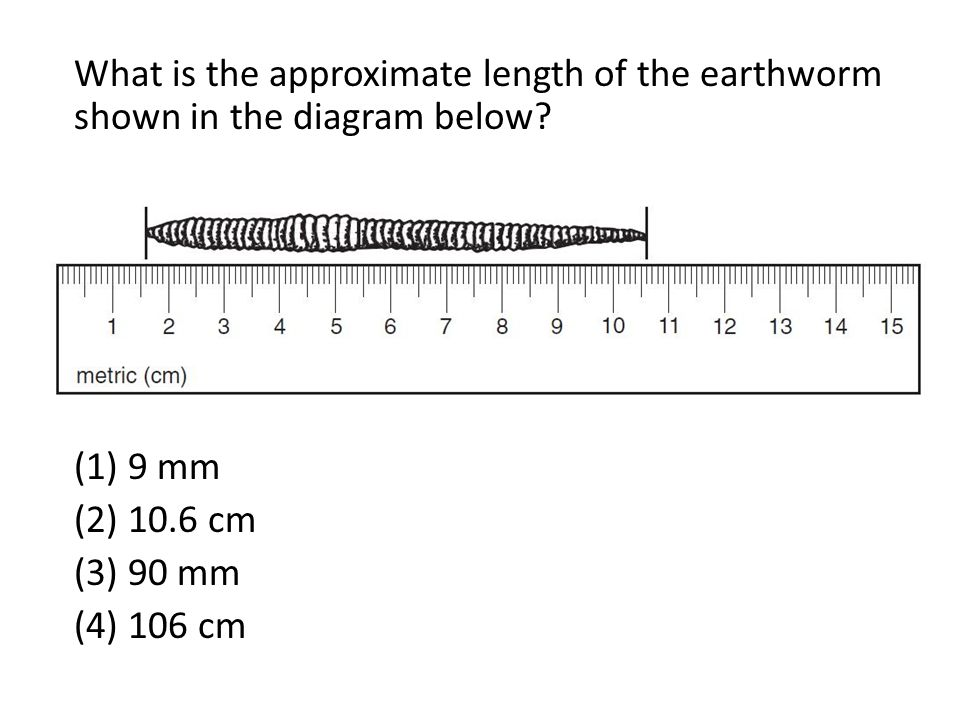 What is the approximate length of the earthworm shown in the diagram below? (1) 9 mm (2) 10.6 cm (3) 90 mm (4) 106 cm
