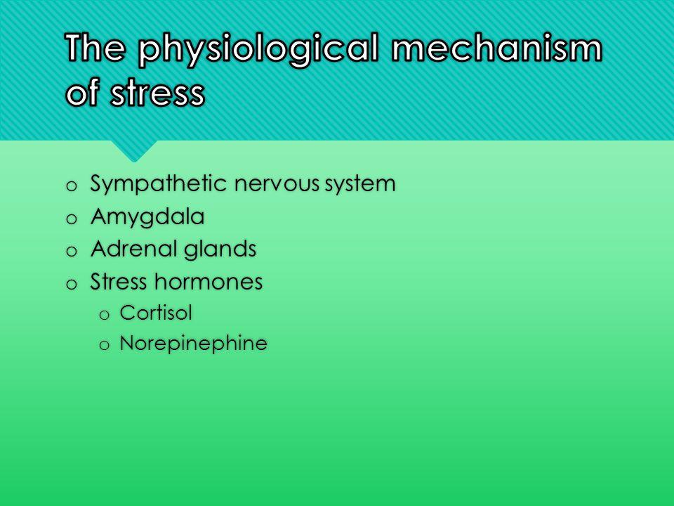 o Sympathetic nervous system o Amygdala o Adrenal glands o Stress hormones o Cortisol o Norepinephine o Sympathetic nervous system o Amygdala o Adrena