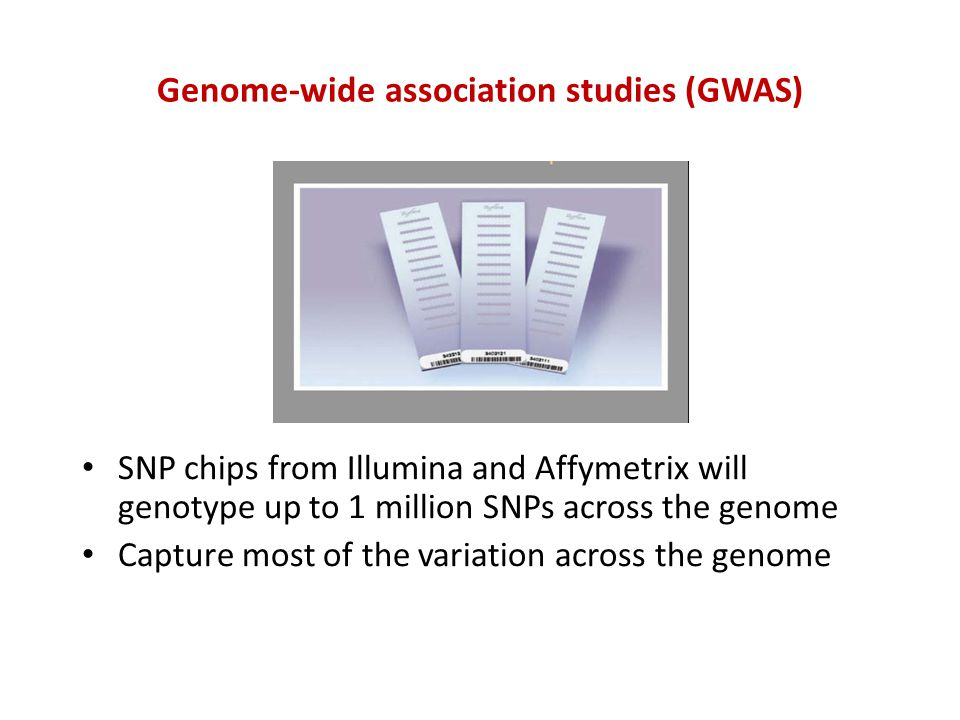 Genome-wide association studies (GWAS) SNP chips from Illumina and Affymetrix will genotype up to 1 million SNPs across the genome Capture most of the variation across the genome