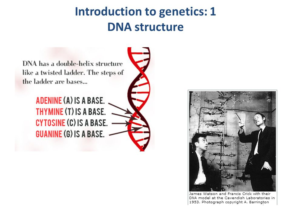 www.onlineeducation.net/dna Introduction to genetics: 2 DNA sequence