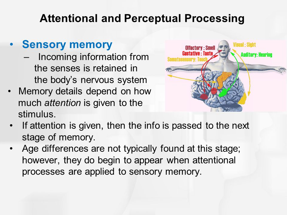 Attentional and Perceptual Processing Sensory memory –Incoming information from the senses is retained in the body's nervous system Memory details dep