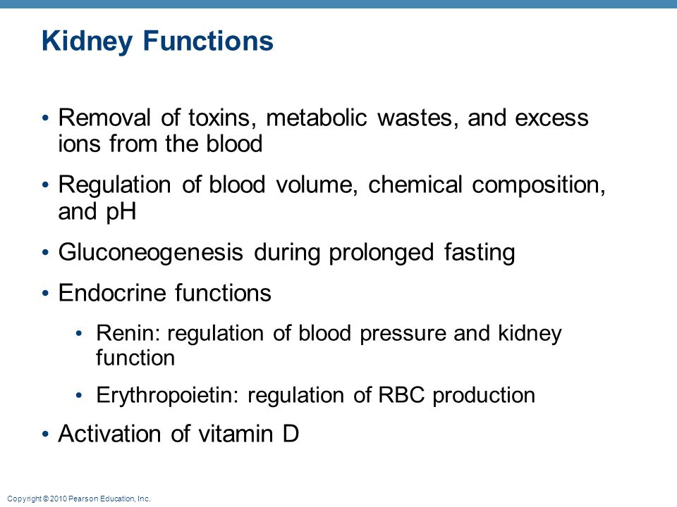 Copyright © 2010 Pearson Education, Inc. Kidney Functions Removal of toxins, metabolic wastes, and excess ions from the blood Regulation of blood volu