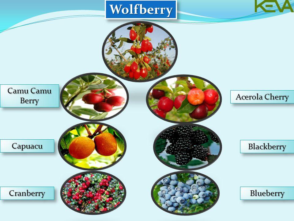 WolfberryWolfberry Camu Camu Berry CapuacuCapuacu CranberryCranberryBlueberryBlueberry BlackberryBlackberry Acerola Cherry