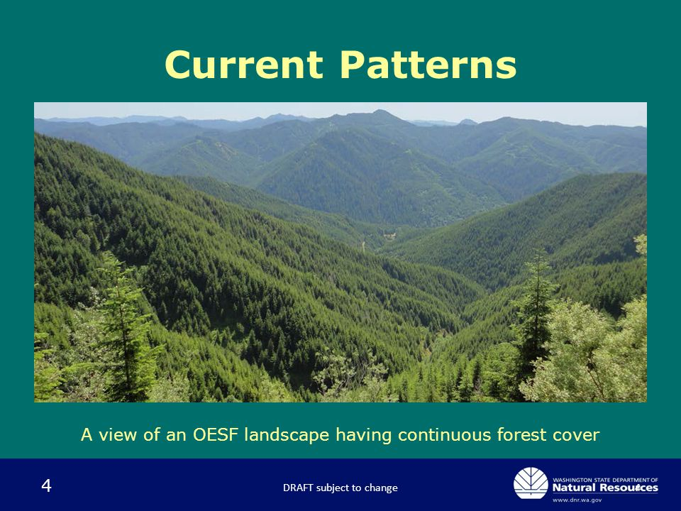 4 Current Patterns DRAFT subject to change4 A view of an OESF landscape having continuous forest cover