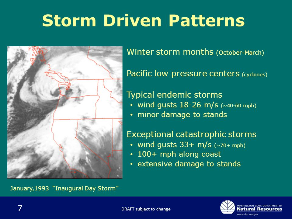 7 Storm Driven Patterns – Winter storm months (October-March) – Pacific low pressure centers (cyclones) – Typical endemic storms wind gusts 18-26 m/s (~40-60 mph) minor damage to stands – Exceptional catastrophic storms wind gusts 33+ m/s (~70+ mph) 100+ mph along coast extensive damage to stands January,1993 Inaugural Day Storm DRAFT subject to change