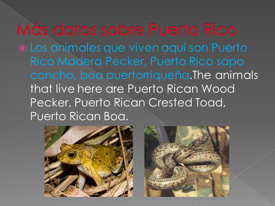  Los animales que viven aqui son Puerto Rico Madera Pecker, Puerto Rico sapo concho, boa puertorriqueña.The animals that live here are Puerto Rican Wood Pecker, Puerto Rican Crested Toad, Puerto Rican Boa.